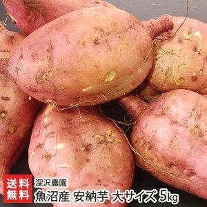 魚沼産 低温熟成さつまいも 安納芋(あんのういも)大サイズ 5kg(1本あたり300〜600g)深沢農園 【アンノウイモ/さつま芋/サツマイモ/焼き芋/スイーツ】【お歳暮に!ギフトに!贈り物・内祝