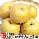 新潟産 岩福農園の日本梨 家庭用 愛宕 5kg(5〜9玉)【愛宕梨】【送料無料】