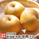 新潟産 窪田梨果園の日本梨 新興 3kg(4〜6玉)【新興梨】【11月上旬頃から順次発送】【お歳暮・贈り物・内祝いに!の…
