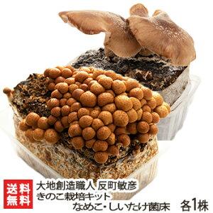 栽培 椎茸