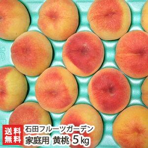 新潟産 黄桃 贈答用 5kg(13〜18玉)石田フルーツガーデン【訳あり】【もも/モモ/フルーツ/果物】【送料無料】
