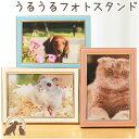 【ペット仏具】選べる3色 うるうる光沢カラーフォトスタンド透明 ペット仏壇 ペット 仏壇 きれい かわいい 写真…