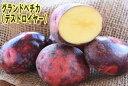 【種ジャガイモ・種いも】「グラウンドペチカ(デストロイヤー)」の種じゃがいも 約500g入