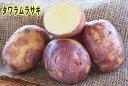 【種ジャガイモ・種いも】「タワラムラサキ」の種じゃがいも 約500g入【春ジャガイモ用12月下旬〜2月中旬発送】