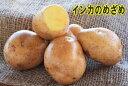 【種ジャガイモ・種いも】「インカのめざめ」の種じゃがいも 約500g入【春ジャガイモ用12月上旬〜2月下旬発送】