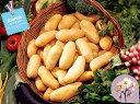 【種ジャガイモ・種いも】フレンチポテト「ジョアンナ」の種じゃがいも 約500g入【春ジャガイモ用12月下旬〜2月中旬発送】