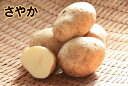 【種ジャガイモ・種いも】「さやか」の種じゃがいも 約500g入【春ジャガイモ用12月下旬〜2月中旬発送】