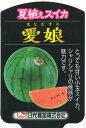 夏植えスイカ 愛娘(まなむすめ) 9cmポット苗 2本セット 【7月上旬より発送分予約】