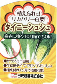 リカバリー白菜(ハクサイ)タイニーシュシュ 9cmポット苗2本セット【10月中旬出荷】