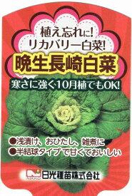 リカバリー白菜(ハクサイ)晩生長崎白菜 9cmポット苗2本セット【10月中旬出荷】