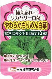 リカバリー白菜(ハクサイ)やわらかちりめん白菜 9cmポット苗2本セット【10月中旬出荷】