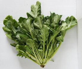 【香味菜】ケールッコラ 9cmポット苗 2本セット