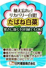 リカバリー白菜(ハクサイ) たばね白菜 9cmポット苗2本セット【10月中旬出荷】