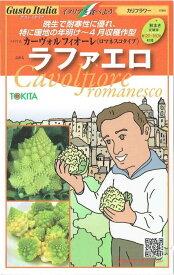 トキタ種苗 ロマネスコ 「ラファエロ」のタネ 約50粒