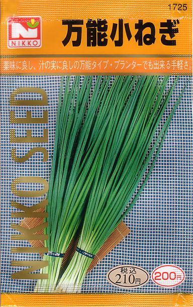 万能小ねぎ(ネギ) 【春】【秋】 【郵送対応】