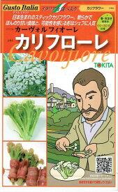 トキタ種苗 カリフラワー カリフローレ80 約50粒 【郵送対応】