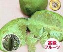 フィンガーライム(緑・グリーン系) 13.5cmポット苗(地上部約50cm)【3月上旬発送】