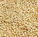 穀物アマランサスの種 1dl入【春】【種まき時期:4〜6月頃】 【郵送対応】