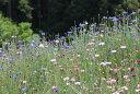 ワイルドフラワー 景観植物のたね「矢車草(やぐるまそう、ヤグルマソウ、セントーレア)混合 1デシリットル(100ミ…