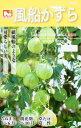 風船かずら(フウセンカズラ)1.2ml(約10粒) 【春】 【郵送対応】