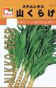話題の野菜・山くらげ(やまくらげ、ヤマクラゲ、茎レタス)の種 【春】【秋】 【郵送対応】