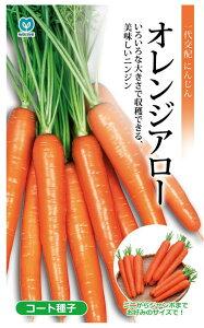 丸種 オレンジアロー人参 コート種子 約320粒(にんじん・ニンジン) 【郵送対応】