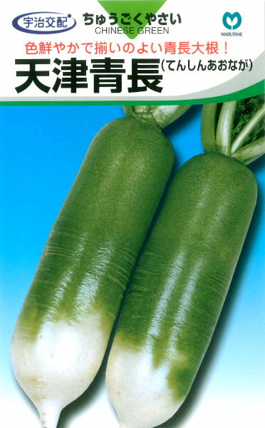 丸種 だいこん 天津青長 9ml【郵送対応】