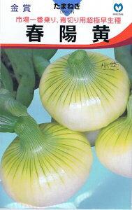 丸種 タマネギ 春陽黄 2ml 【郵送対応】【7月より発送です】