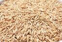 タキイ種苗 ペット用エンバク(農薬未処理) 1kg
