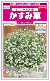 サカタのタネ かすみ草 ジプシーホワイト 約30粒 【郵送対応】
