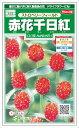 サカタのタネ 赤花千日紅 ストロベリーフィールド 0.4ml【郵送対応】