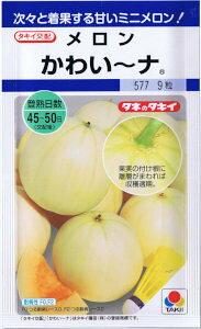 タキイ交配 メロン かわい〜ナ 約9粒 【郵送対応】