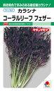 タキイ種苗 コーラルリーフフェザー 7ml 【郵送対応】