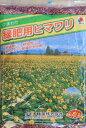 タキイ種苗 緑肥用ヒマワリ 500g 【宅配便対応】