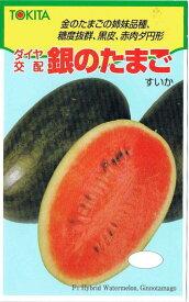 トキタ種苗 スイカ 銀のたまご 10粒【郵送対応】