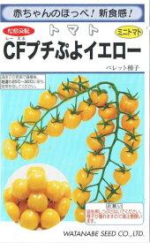 渡辺採種場 ミニトマト CFプチぷよイエロー 生種 約10粒【郵送対応】