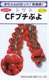 渡辺採種場 トマト CFプチぷよ 生種 9粒 【郵送対応】
