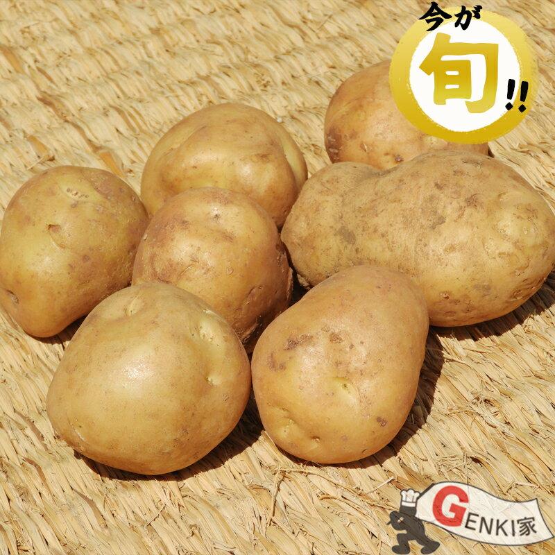 佐賀七山・福岡糸島の新鮮野菜 新じゃが 5〜6個(じゃがいも)