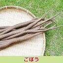 佐賀七山・福岡糸島の新鮮野菜 ごぼう1袋