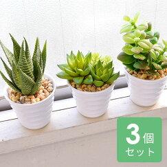 フェイクグリーン3点セット多肉ポット人工観葉植物グリーンインテリアかわいい