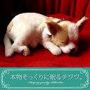 【本物そっくりに眠るチワワ(スムース)のぬいぐるみ】パーフェクトペット|犬のぬいぐるみ|動くぬいぐるみ|クリスマ…