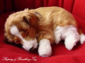 【パーフェクトペット シェルティ(コリー) ぬいぐるみ】犬 イヌ いぬ ぬいぐるみ リアル 本物 そっくり ペット