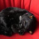 本物そっくりに眠るぬいぐるみパーフェクトペット【黒猫】リアル 猫 動く ぬいぐるみ ギフト プレゼント 誕生日 クリ…
