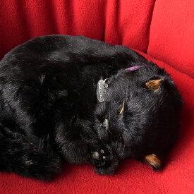 パーフェクトペット 黒猫 ぬいぐるみ / 本物 そっくり リアル ペット メモリアル 猫 ねこ ネコ
