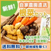 根菜セット今なら自家製の緑茶100gをプレゼント