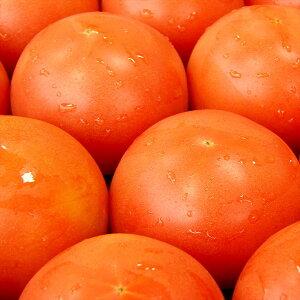 トマト かしも桃太郎トマト 約4kg 岐阜県産 生野菜 産地直送野菜 夏野菜 甘い JA全農岐阜 桃太郎