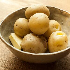 じゃがいも 産地厳選 秀品 2Lサイズ 3kg 品種おまかせ 野菜 じゃが芋 ニシユタカ 男爵いも 岐阜県 送料無料