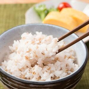 もち麦 讃岐もち麦ダイシモチ 2kg 国産 もち麦 お得用 大袋 香川県産 もちむぎ まんでがん 紫もち麦