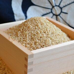 菊池掛け干し清流米 にこまる 玄米 10kg 熊本県産 無農薬 米 にこまる お米 九州 ごはん 阿蘇 ご飯 精米 原川農園 完全無農薬