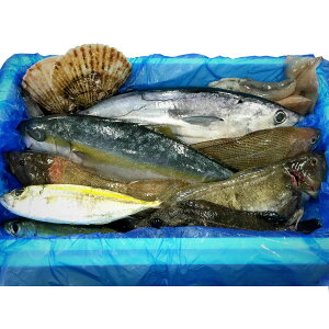 気仙沼 漁師さんの鮮魚セット〔約3〜5kg※漁獲種類により異なります〕 一般社団法人 Fish Market 38 宮城県